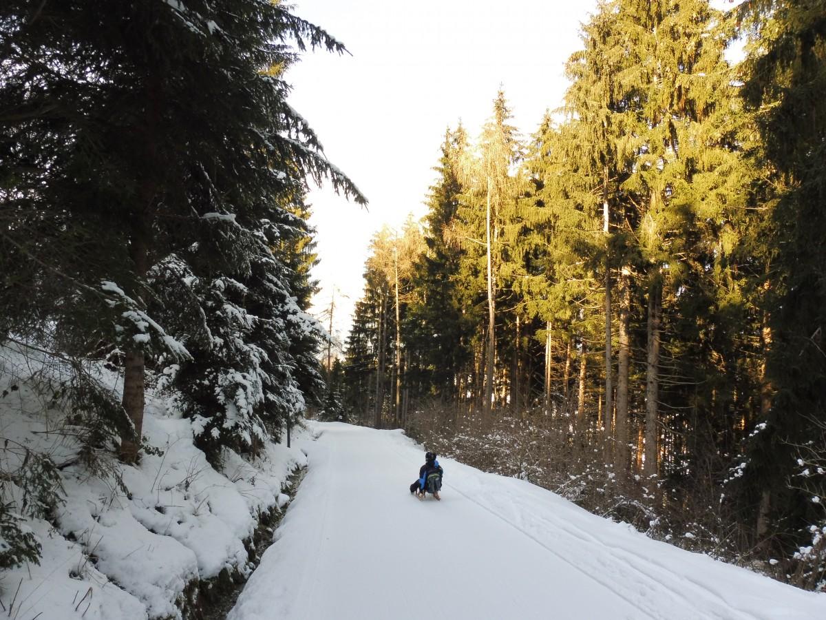 Sleetocht in Oberperfuss Innsbruck