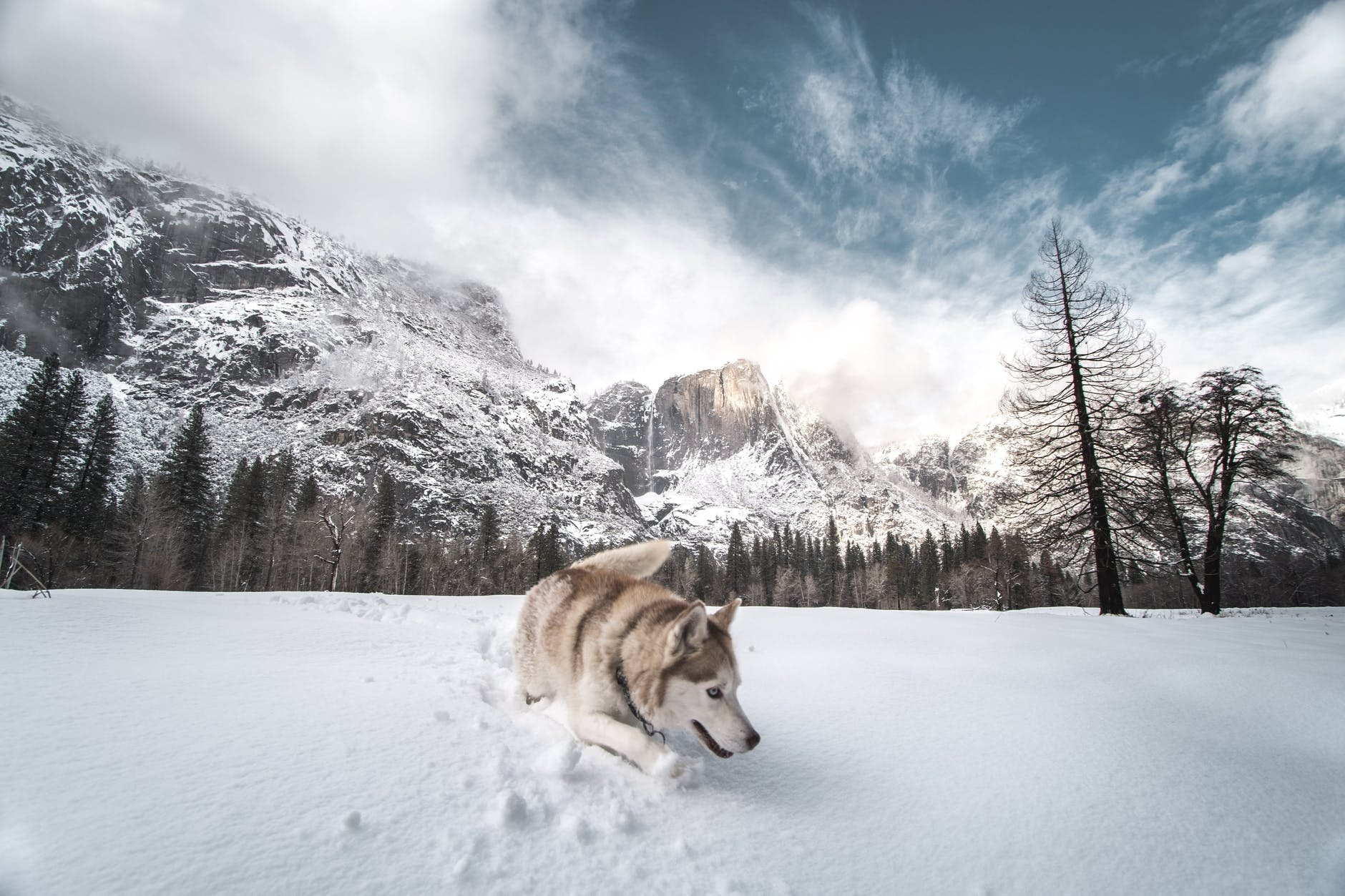brown and white siberian husky on snow covered ground